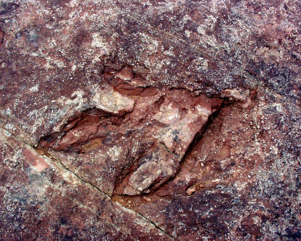 Dinosaurierspuren im Red Fleet State Park in der Nähe von Vernal Foto Credit: Utah Office of Tourism
