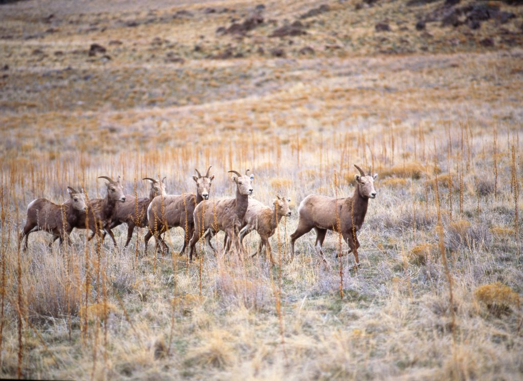 Foto: Antelope Island State Park. Credit: Steve Greenwood│Utah Office of Tourism