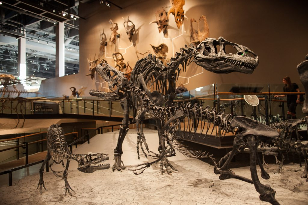 Foto: Natural History Museum in Salt Lake City. Credit: Utah Office of Tourism