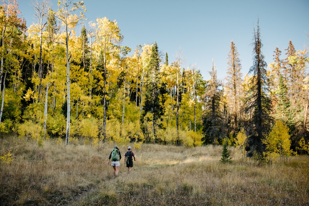 Fishlake National Forest_Pando_Copyright_Austin Diamond